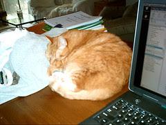 friday cat blogging #1