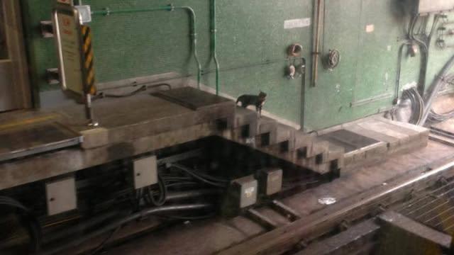 2013年有貓隻曾闖葵芳站路軌三日,幸終獲救。(網上圖片)
