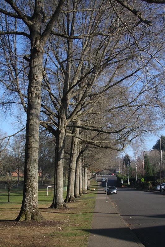Pendleton Park