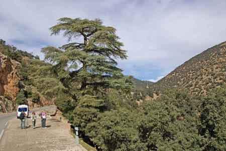 Grand sud maroc - Azrou - Atlas