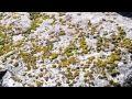 Un minuto en el Lago Huechulafquen