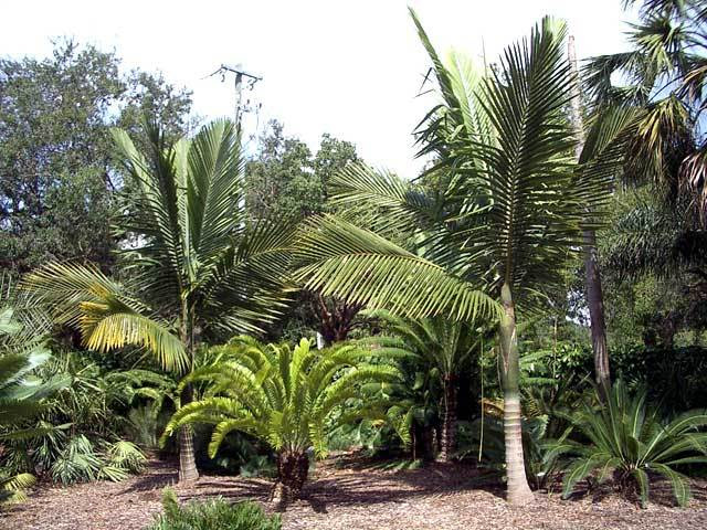 Want my landscape to look like this picture - Palm Tree Community