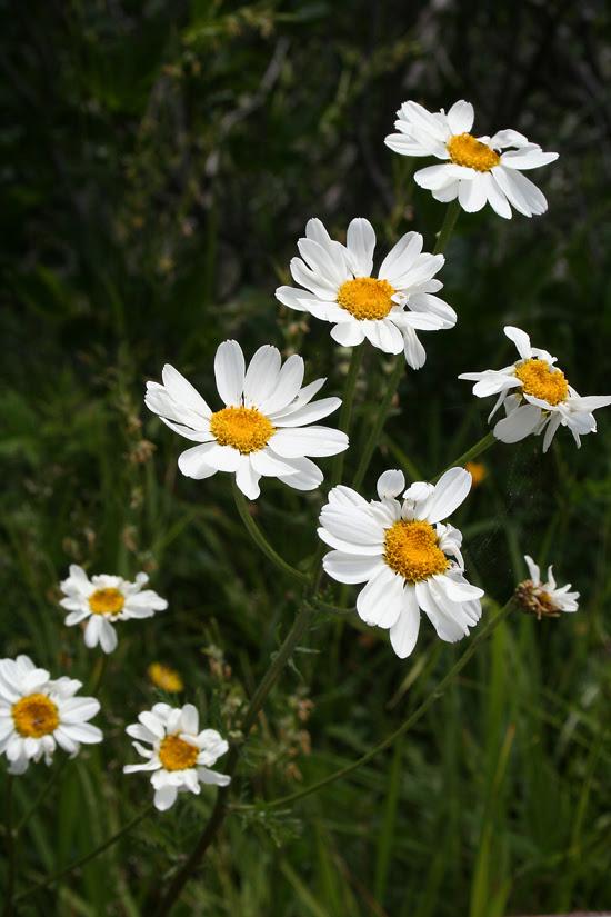fioritura 2