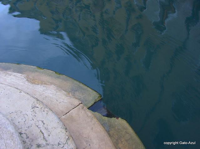 Creeping Tide