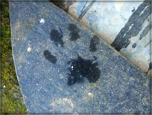 Pip's paw print
