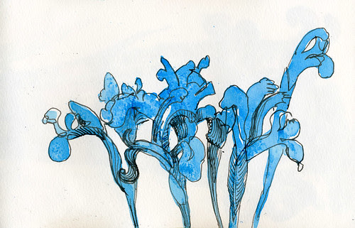 January Irises by apple-pine