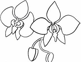 Sketsa Bunga Anggrek Hitam