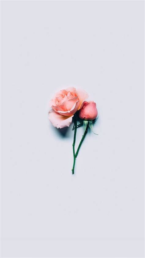 flowers pinterest wallpaper flowers  phone