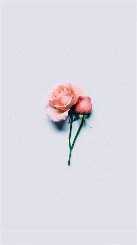 Cute Red Rose Wallpapers For Iphone
