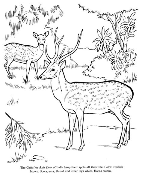 wild animal drawing recognition pages   fun