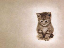 Papel de parede 'Gato #2'