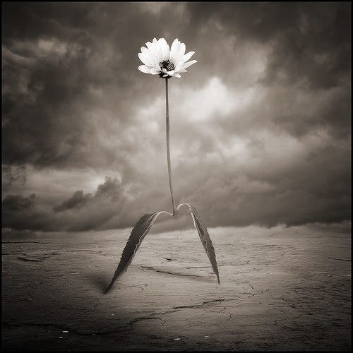 Walking Flower por yves.lecoq
