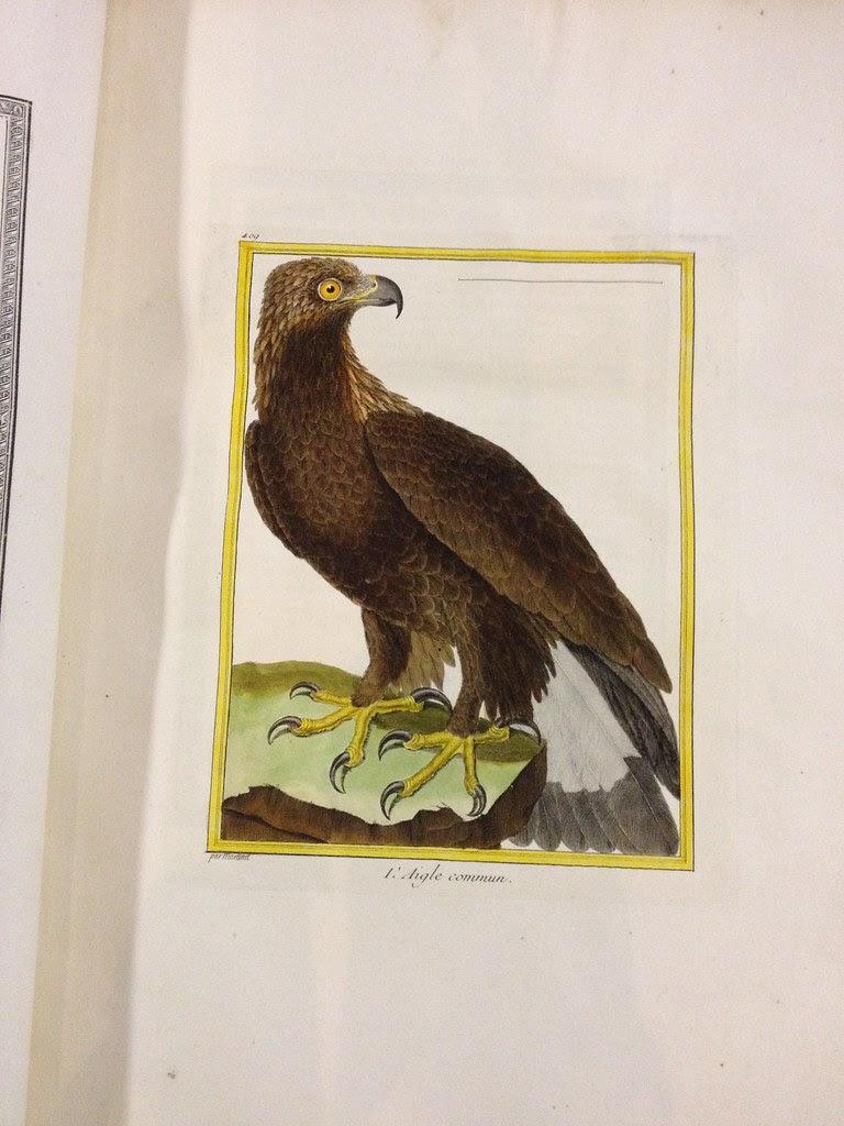1771 histoire naturelle des oiseaux