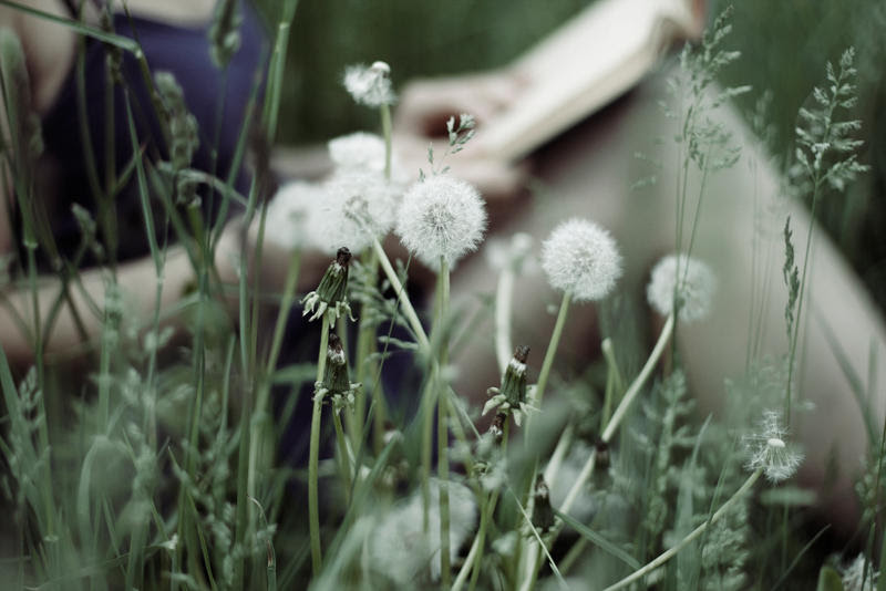 http://fc04.deviantart.net/fs70/i/2013/147/b/9/the_dandelion_whisper_by_pinkparis1233-d66s184.jpg