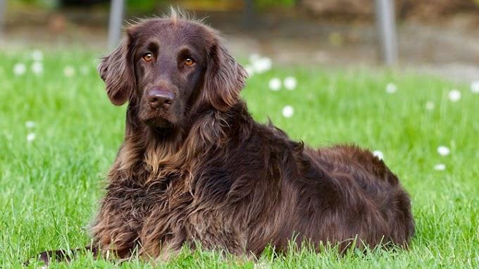 Cuidado con el pelo del perro en primavera