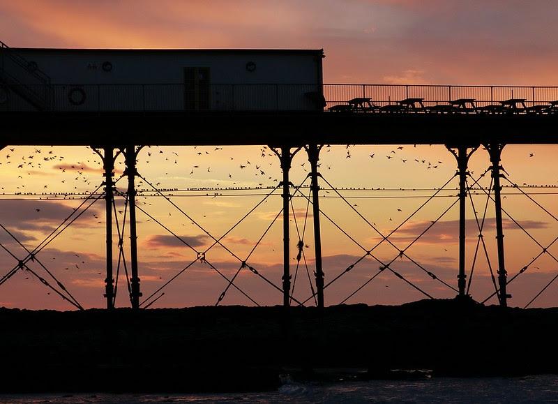 29163 - Starling Murmuration, Aberystwyth Pier