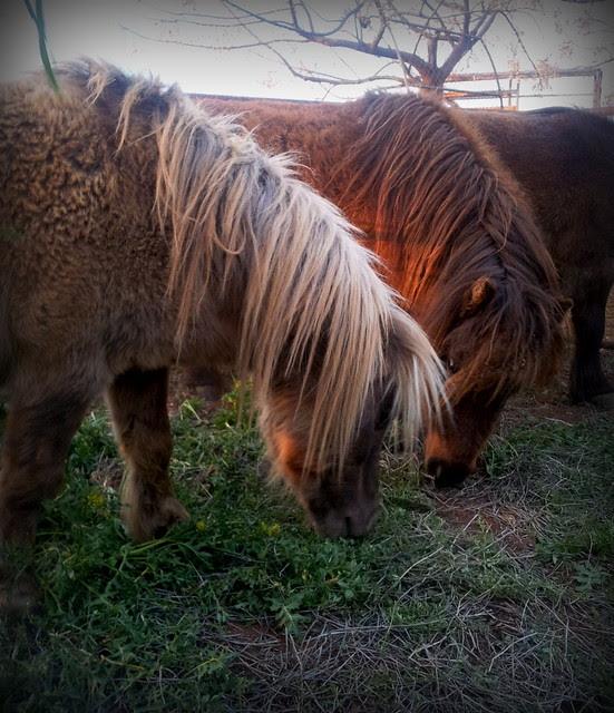reins 3
