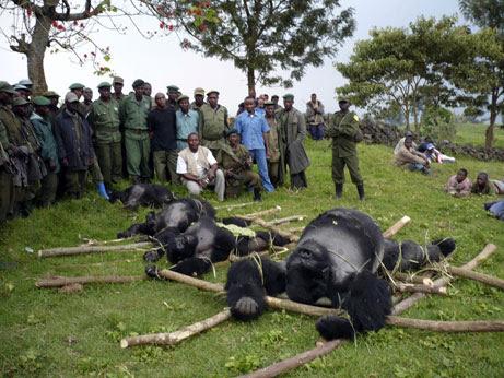 Παράνομο εμπόριο άγριων ζώων
