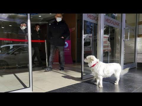 FAZ: «турецкий Хатико» — собака, ждавшая хозяина у дверей больницы почти неделю, стала знаменитостью