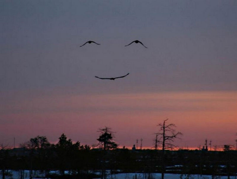 http://justsomething.co/wp-content/uploads/2013/09/three-birds-make-smiling-face.jpg