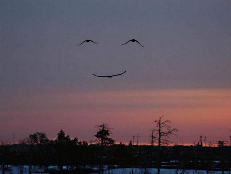 http://justsomething.co/wp-content/uploads/2013/09/three-birds-make-smiling-face.jpg