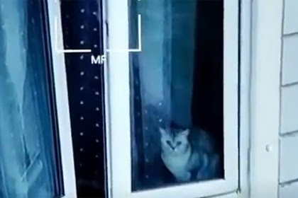 Жителям взорвавшегося дома в Ногинске запретили забрать своих животных