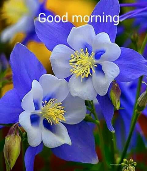 Beautiful Good Morning Flowers Quote Pictures Photos And Images