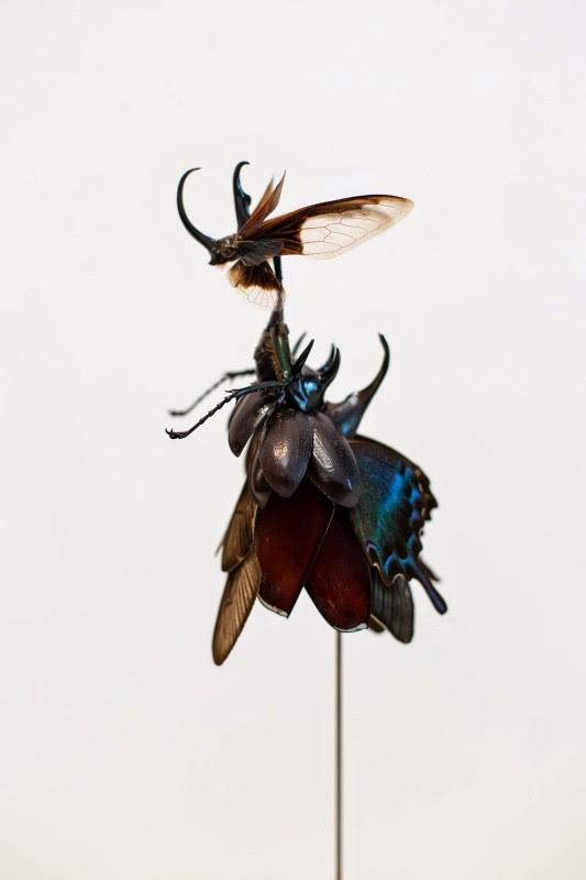 fee insecte graine morceau assemblage 05 533x800 Les fées de Cedric Laquieze