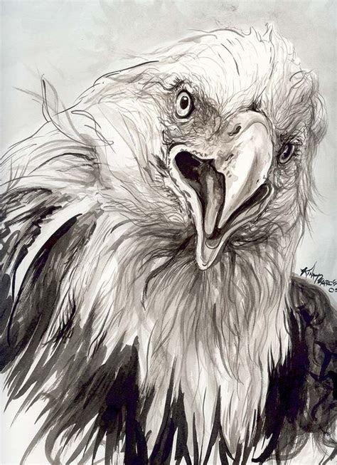 eagle sketch pesquisa google penas passaros birds