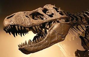 Tyrannosaurus rex skull and upper vertebral co...