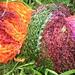 Interlacements Montana 'poppies'