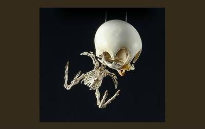 Tweety bird skeleton