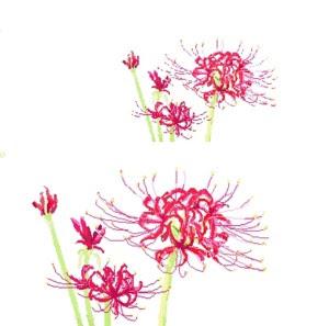 Span Stylecolor Cc0033簡単お絵描き 彼岸花曼珠沙華