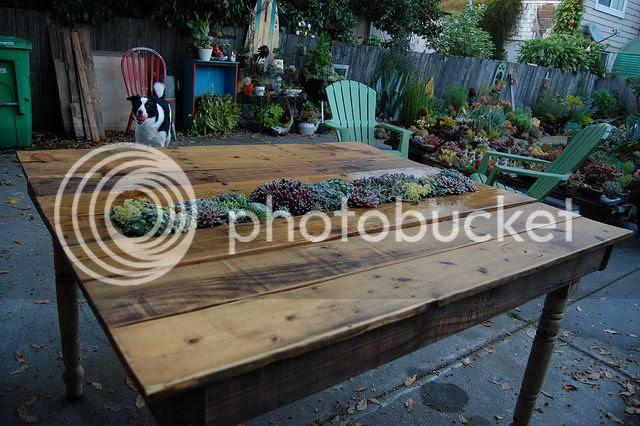 diy succulent table