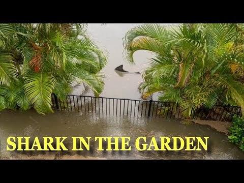 Акула поплува безгрижно в двор на къща