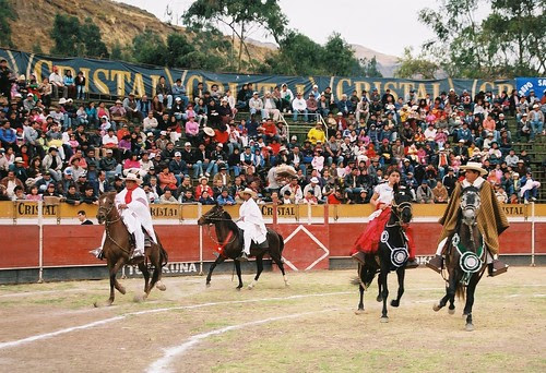 Caballos de paso peruano en Canta