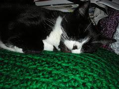 WCB 179 Round Up: Diva Kitty sleep