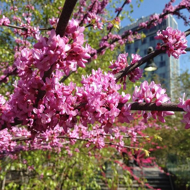Spring blossoms brighten old rail road tracks <3