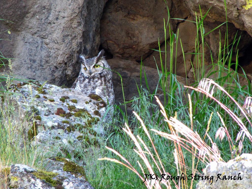 Hiding in the Rim Rock