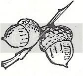 Scan_Pic0098.jpg acorn_clipart picture by sarahjmorriss