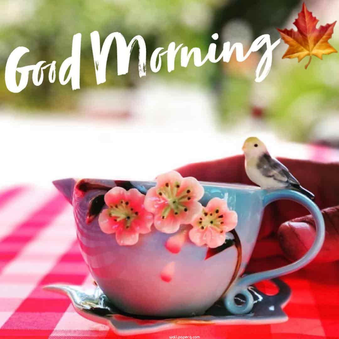 Download Good Morning Hd Wallpaper Whatsapp Good Morning