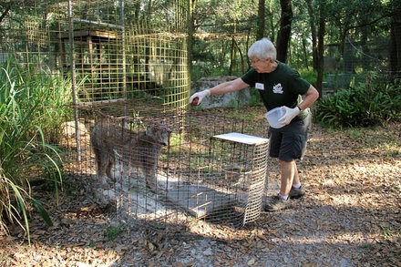 Volunteer at Sanctuary Featured in 'Tiger King' Is Injured During Feeding