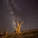 Milky Way Over Bristlecone Pine
