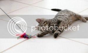 Ajak Kucing Bermain