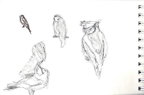 Owls, gull