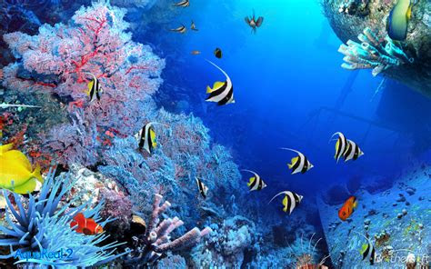 Unduh 950+ Wallpaper Pemandangan Bawah Laut Bergerak Paling Keren