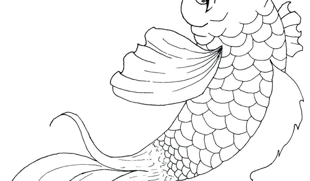 Realistic Koi Drawing at GetDrawings   Free download