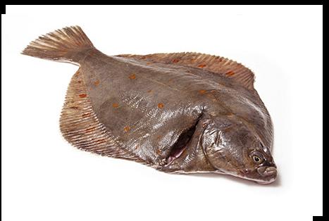 Flatfish Fish - Fishing Boats Blog