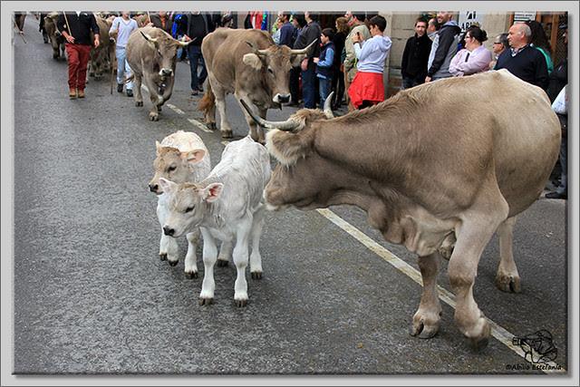 4 Feria de ganado en Potes 2013