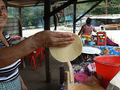 tortilla crue.jpg